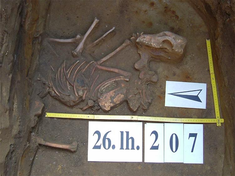 Kutya csontváza a 207. objektum alján