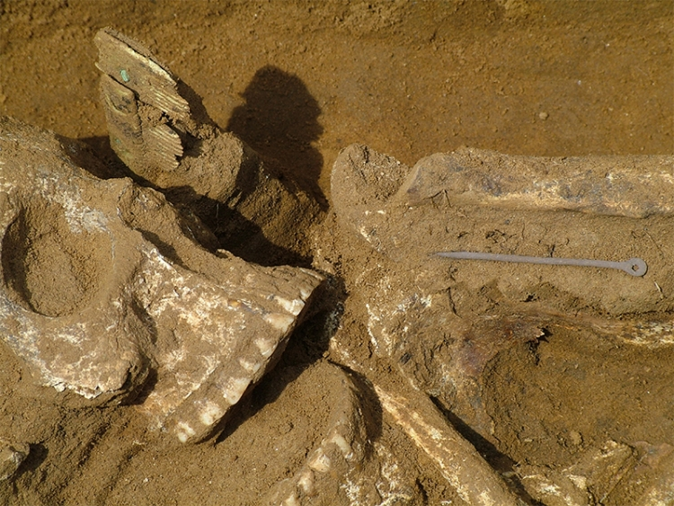 20. sír – csontfésű, illetve részlet az egyik tűvel
