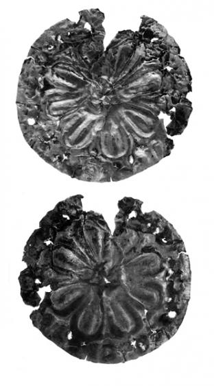 Aranyrozetta (préselt, lemezes)