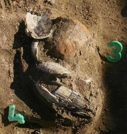 A középpontban lévő sír csészéje és kagylói